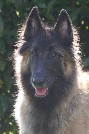 Time of Wolves Avaria-Joy
