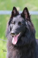 Ella von Canis Lupus Pallipes